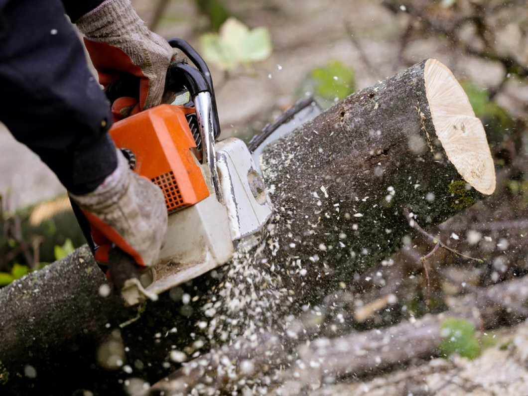 5 reasons to schedule tree removal services